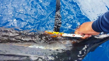 TRINITY Jigging lures with sword fish